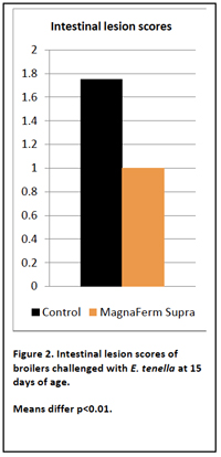 intestinal-chart