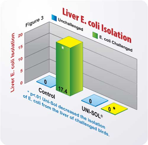 Figure 3 Liver E coli Isolation