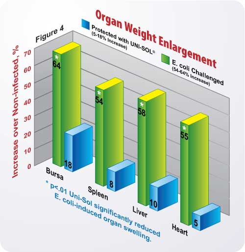 Figure 4 Organ Weight Enlargement Chart